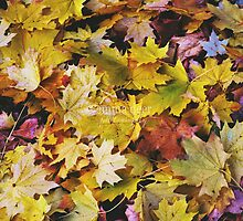 Wet Leaves and the Dirty Ground by Emma Deer Photography