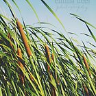 Cattails by Emma Deer Photography