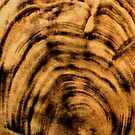 "Fossil IV - Woodcut Print (close up) by Belinda ""BillyLee"" NYE (Printmaker)"