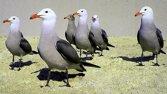 Seagulls at Attention, Except One by paintingsheep