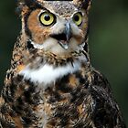 Great Horned Owl by CcoatesPhotos