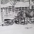 Kelpie working brama cattle by texasrose34