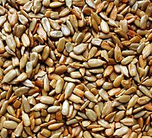 Sunflower Seeds by debidabble