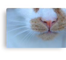 Purrsonal Close-Up Canvas Print