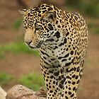 Leopard Cub by Peggy  Woods Ryan