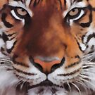 Tiger Portrait by michael montgomerie