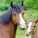 Mare & Foal by M.S. Photography & Art