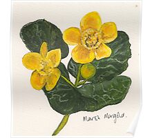 Marsh marigold Poster
