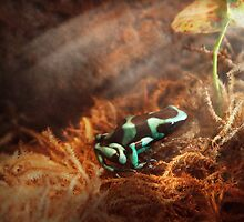 Animal - Frog - Lick the green frog by Mike  Savad