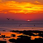 Seagulls at Sunset by Hannah Sterry