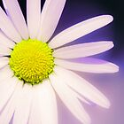 Beautiful flower, beautiful colour by Wayman