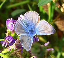 Beautiful Little Blue by ienemien