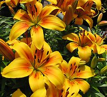 March of the Lilies by BlueMoonRose