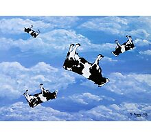 Falling Cows Photographic Print