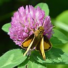 Peck's Skipper by William Brennan