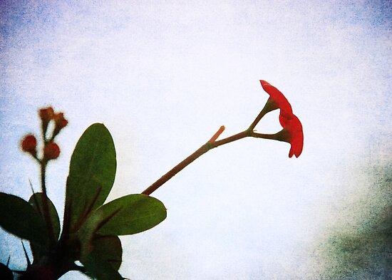 Little beauty by Denis Marsili - DDTK