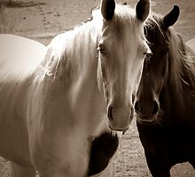 Two Horses in Sepia  by jemvistaprint