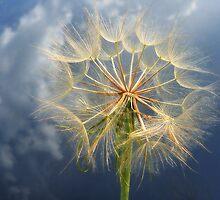Wishing... by LindaR
