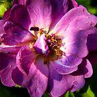 Purple Rose by WildestArt