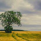 Farm Tree by Shane Rounce