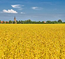 Noordwelle in the middle of the flax by Adri  Padmos