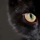 Cat's Eye by ChrisMillsPhoto