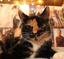 Lola (1) by reebzthecatlady