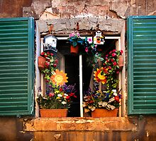 Tuscan window - Siena by newbeltane