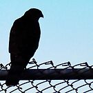 Silhouette of a Hawk by Bine