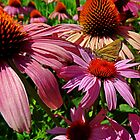 Butterfly on purple cone flower by rondo620