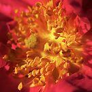 Stamen Shadow by Paul Revans