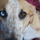 Jasper's eye's. by CarrieCollins