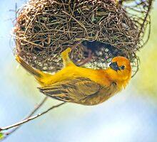 Tavata Golden Weaver by Bonnie T.  Barry