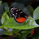 Little Butterfly by rosaliemcm