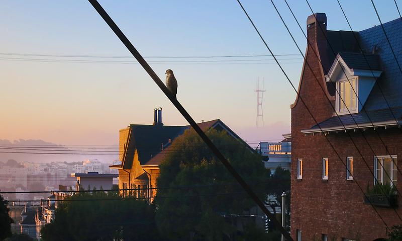 San Francisco Morning by David Denny