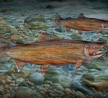 Steelhead Trout Migration in Fall by Randall Nyhof