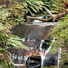Cascades at Leura by SharronS