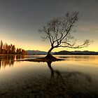 Wanaka - That Tree #1 by Brad Grove