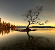 Wanaka - That Tree #1 by Brad Grove