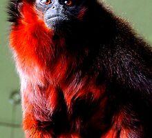 Red Titi Monkey 2 by Barnbk02
