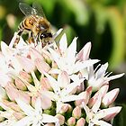 Honey Bee (2) by LeJour