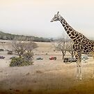 Not in Africa... by Dyle Warren