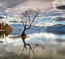 Wanaka, That Tree #4 by Brad Grove
