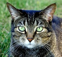 Green Cat Eyes  by Amy McDaniel