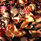 Autumn by Jack Miller