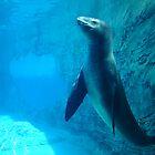Dubious Seal by phwoar