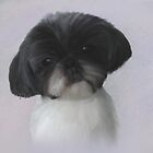 Shih Tzu by Moonlake