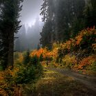 Take The High Road Through The Valley by Charles & Patricia   Harkins ~ Picture Oregon
