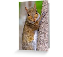 Do You Mind I'm Trying to Climb This Tree Greeting Card