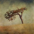 Mother Oak by Honey Malek